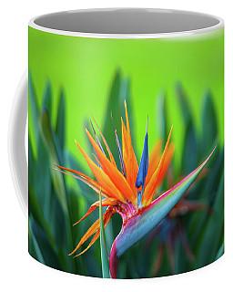 Victoria Falls Bird Of Paradise Coffee Mug