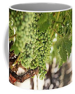 Wine Vineyard Of St. Helena - Grapevine Napa Valley Photography Coffee Mug