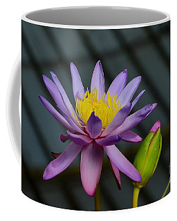 Violet And Yellow Water Lily Flower With Unopened Bud Coffee Mug