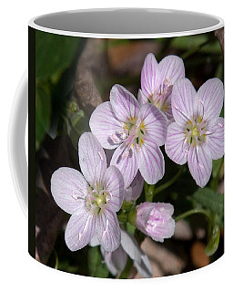 Virginia Or Narrowleaf Spring-beauty Dspf041 Coffee Mug