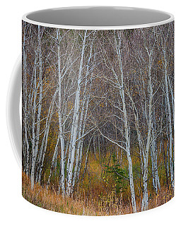Coffee Mug featuring the photograph Walk In The Woods by James BO Insogna