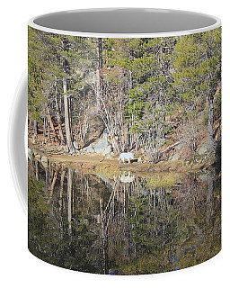 Coffee Mug featuring the photograph Walk On The Wild Side by Sean Sarsfield