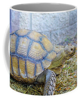 Coffee Mug featuring the photograph Walking Turtle by Raphael Lopez
