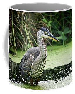 Wary Blue Heron Coffee Mug