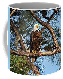 Watching Eaglets In Nest Coffee Mug by Ronald Lutz