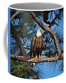 Watching Nest Coffee Mug by Ronald Lutz