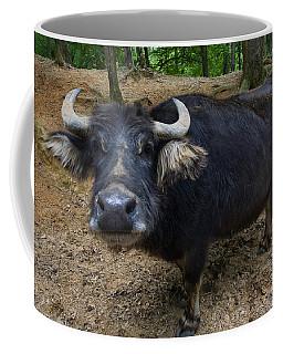 Water Buffalo On Dry Land Coffee Mug
