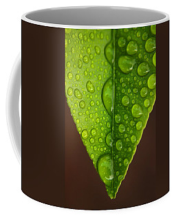 Water Droplets On Lemon Leaf Coffee Mug by Ralph A  Ledergerber-Photography