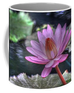 Water Lilly #1 Coffee Mug by Bob Zeller