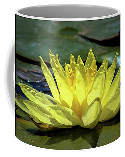 Coffee Mug featuring the photograph Water Lily by Alison Frank