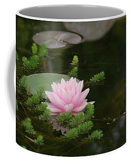 Water Lily Coffee Mug by Victor K