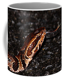 Water Moccasin Coffee Mug