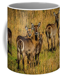 Waterbuck Group Coffee Mug