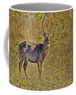 Waterbuck Coffee Mug