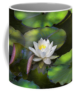 Waterlily In Shade. Coffee Mug