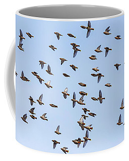 Coffee Mug featuring the photograph Waxwings by Mircea Costina Photography