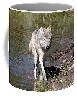 Coffee Mug featuring the photograph Way Of The Wolf by Jack Bell