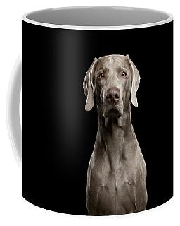 Coffee Mug featuring the photograph Weimaraner by Sergey Taran