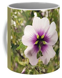 Western Australian Native Hibiscus Coffee Mug by Cassandra Buckley