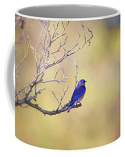 Western Bluebird On Bare Branch Coffee Mug