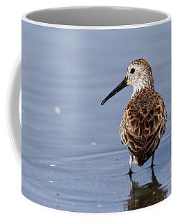 Western Sandpiper Coffee Mug