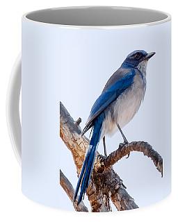 Western Scrub-jay Coffee Mug
