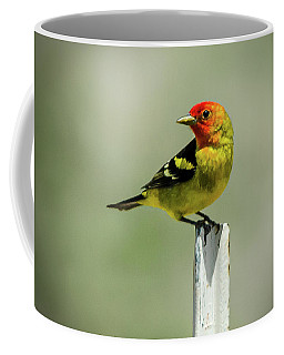 Western Tanager At The Ranch Coffee Mug