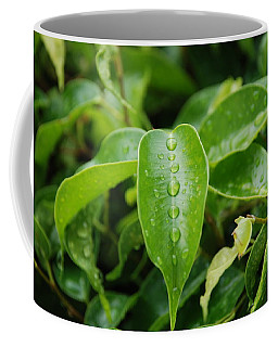 Coffee Mug featuring the photograph Wet Bushes by Rob Hans