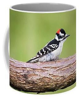 Wet Downy Woodpecker  Coffee Mug by Ricky L Jones