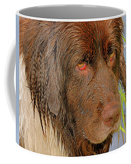 Coffee Mug featuring the photograph Wet Newfie by Debbie Stahre