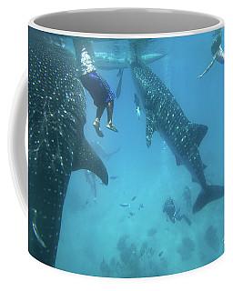 Whale Sharks Coffee Mug