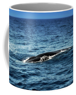 Coffee Mug featuring the photograph Whale Watching Balenottera Comune 3 by Enrico Pelos