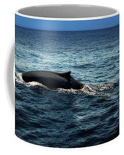 Coffee Mug featuring the photograph Whale Watching Balenottera Comune 6 by Enrico Pelos