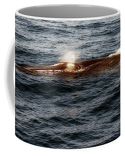 Coffee Mug featuring the photograph Whale Watching Balenottera Comune 7 by Enrico Pelos