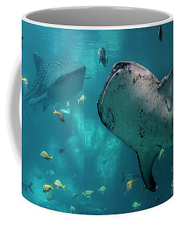 Whale-sharks Coffee Mug by Barbara Bowen