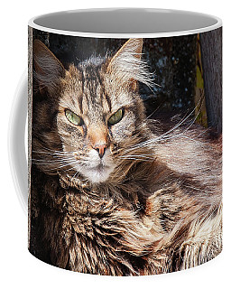 Coffee Mug featuring the photograph Whiskers by Geoff Smith