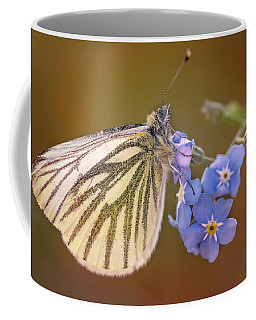White And Creamy Butterfly On Forget Me Not Flower Coffee Mug by Jaroslaw Blaminsky