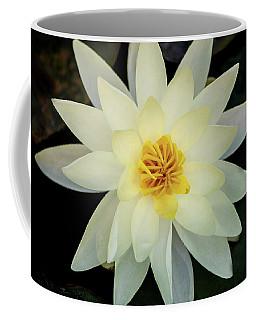 White And Yellow Water Lily Coffee Mug