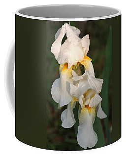 Two White Bearded Iris At Dusk Coffee Mug by Sheila Brown