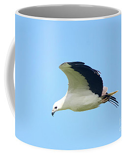 White Bellied Sea Eagle Coffee Mug