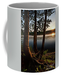 White Birch And Kennebec River At Sunset, So.gardiner Me #8360-63 Coffee Mug