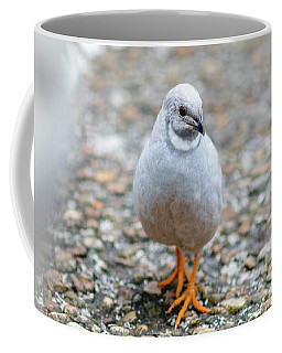 Coffee Mug featuring the photograph White Bird Sneaking Through by Raphael Lopez