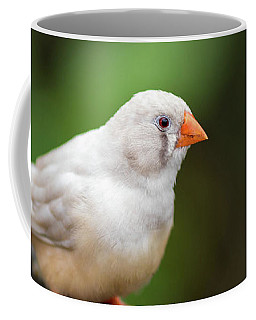 Coffee Mug featuring the photograph White Bird Standing On Deck by Raphael Lopez