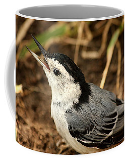 White Breasted Nuthatch 2 Coffee Mug by Sheila Brown