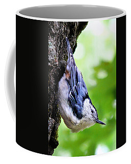 White Breasted Nuthatch Coffee Mug