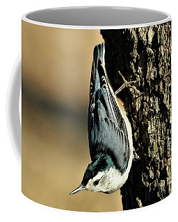 White-breasted Nuthatch On Tree Coffee Mug by Sheila Brown
