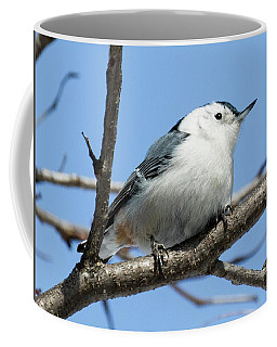 White-breasted Nuthatch Perched Coffee Mug