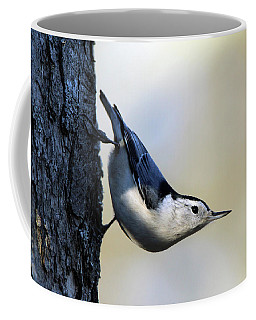White Breasted Nuthatch Wading River New York Coffee Mug