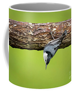 White-breasted Nuthatches Coffee Mug
