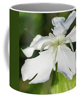 White Campion 1 Coffee Mug